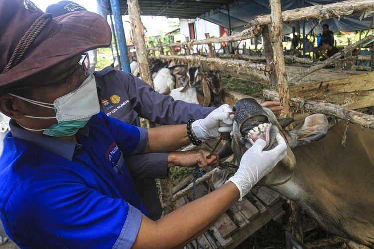 Ketua PDHI Sumatera Selatan Jafrizal melakukan pengecekan hewan kurban yang ada di Palembang, Kamis (15/7/2021).
