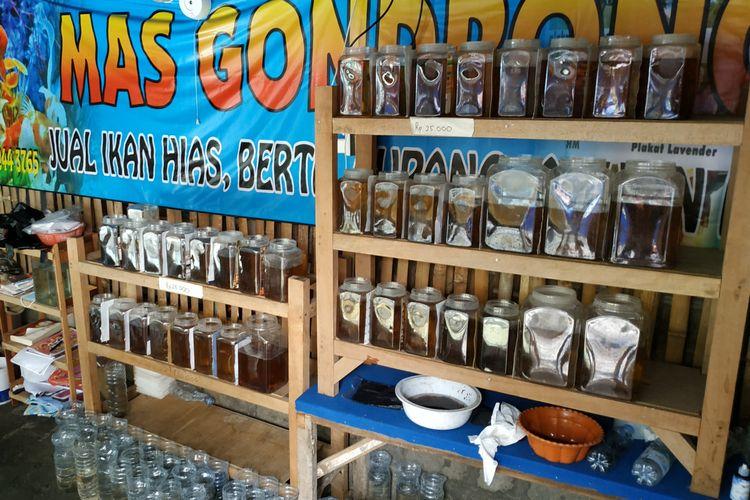 Ilustrasi: Ikan Cupang di salah satu kios penjualan ikan cupang di kawasan Pasar Loak,  Kaliombo, Kota Kediri, Jawa Timur.