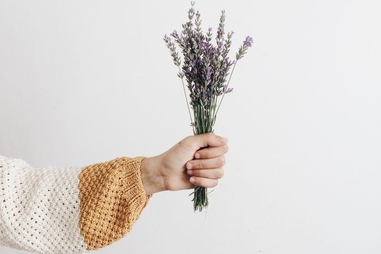 Lavender termasuk tanaman yang bisa mengusir nyamuk.