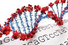 Dua Kasus Mutasi Virus Corona, Wamenkes: Fresh From The Oven Ditemukan Tadi Malam