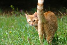 Kenapa Kucing Spraying atau Menyemprotkan Urin? Ini Sebabnya