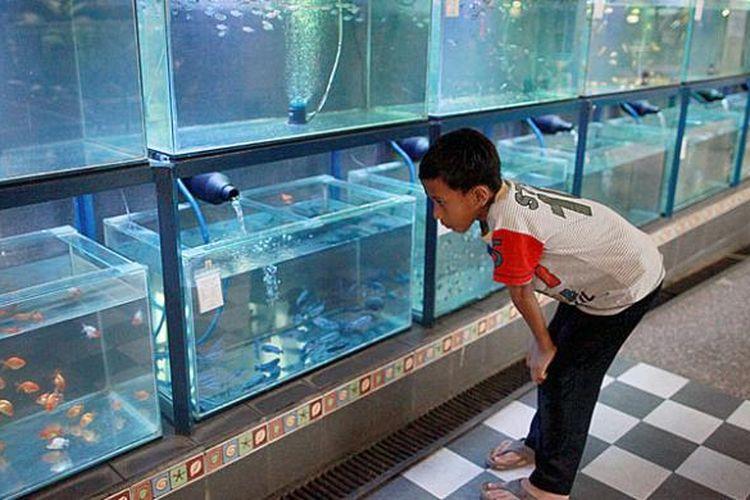 Indonesia Bidik Peluang Usaha Ikan Hias