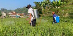 Tingkatkan Kemudahan Izin Usaha Pertanian, Kementan Terapkan Pendekatan Berbasis Risiko