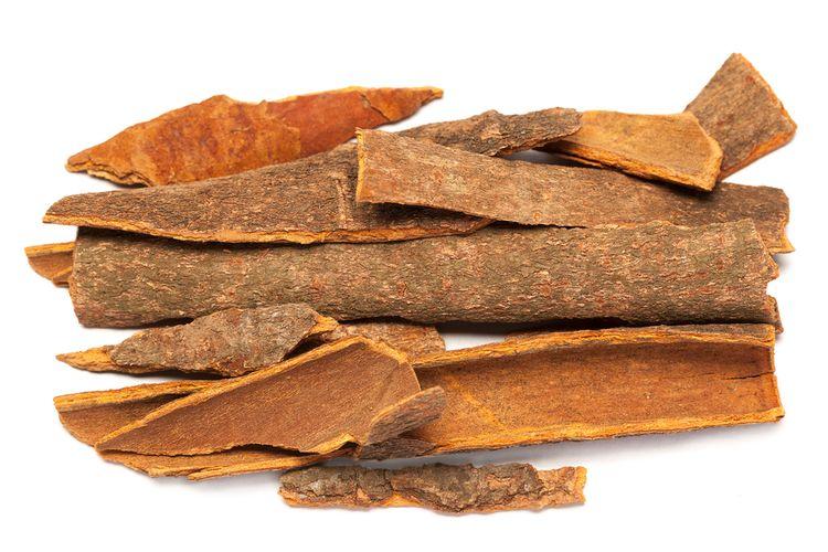 Ilustrasi cinnamomum camphora atau  kayu manis, salah satu kampor.