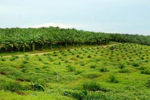 Cegah Karhutla, Minamas Plantation Gandeng Universitas Tanjungpura