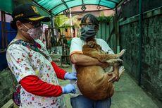 Jakarta Utara Gelar Vaksinasi Rabies untuk Hewan Peliharaan