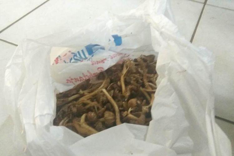Salah seorang keluarga korban menunjukkan jamur yang dikonsumsi para korban hingga mengalami keracunan, di IGD RSUD Ciamis, Selasa (10/3/2020).