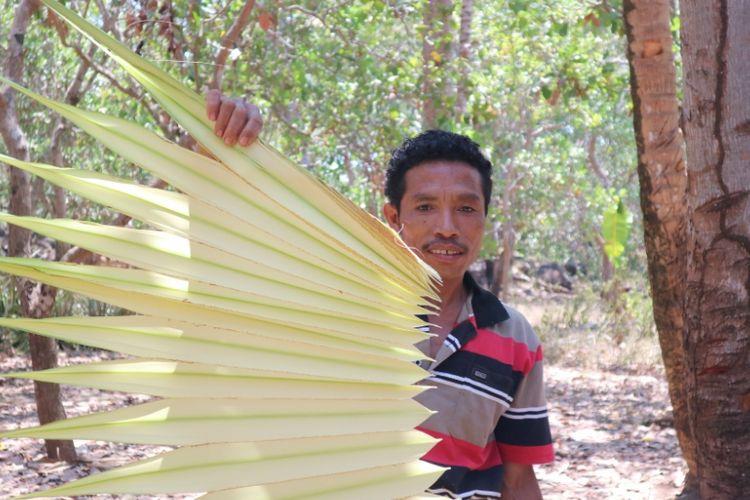 Hasil panen pucuk daun lontar untuk dijadikan bahan anyaman di salah satu rumah anyam DuAnyam, di Konga, Flores Timur, Nusa Tenggara Timur, Sabtu (13/10/2018).