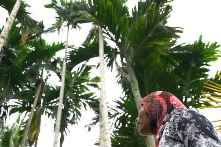 Siti Hajar menghidupi keluarganya dengan memanjat pohon pinang.