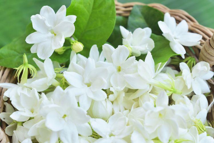 3 Jenis Bunga yang Dapat Predikat Bunga Nasional Indonesia