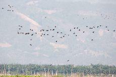 Manfaat Medan Magnet Bumi pada Migrasi Hewan