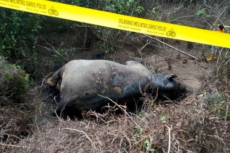 Bangkai gajah ditemukan di areal perkebunan, PT Atakana yang berada di Desa Seumanah Jaya, Kecamatan Rantau Peureulak.  bangkai gajah yang diperkirakan berusia 25 tahun itu awalnya ditemukan oleh pekerja kebun, Kamis (21/11/2019).