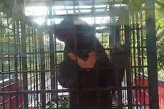 Masuk Permukiman dan Makan Ternak, 2 Ekor Beruang Madu Berhasil Dievakuasi BBKSDA Riau