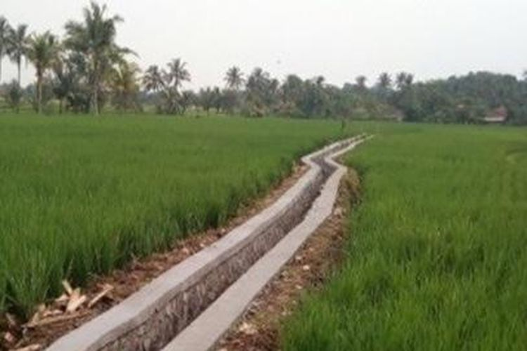 Ilustrasi program Rehabilitasi Jaringan Irigasi Tersier (RJIT) di daerah irigasi Rawa Sepat, Desa Cibodas, Kecamatan Sukatani, Kabupaten Purwakarta, Jawa Barat.