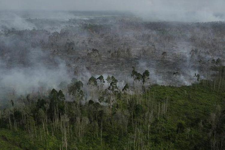 Ilustrasi: Kebakaran hutan