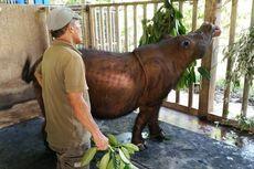 Punah Sudah Badak Sumatera di Malaysia…