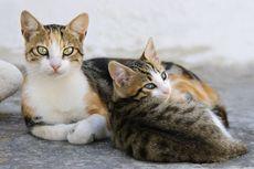 Tips agar Kucing Tak Naik ke Meja