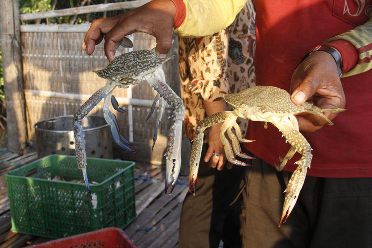 Budidaya kepiting