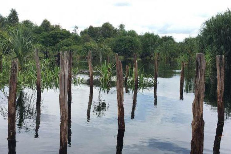 Taman Nasional Sebangau masuk dalam tiga wilayah yakni Kota Palangkaraya, Kabupaten Katingan, dan Kabupaten Pulang Pisau.