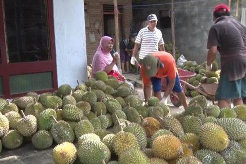 Panen Durian di Trenggalek, Pedagang Raup Omzet Rp 50 Juta Per Hari
