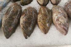 Terpukul Pandemi, Harga Ikan Kerapu di Kepri Anjlok Rp 50.000 Per Kg