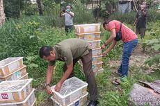 Seorang Pria Ditangkap Saat Membawa 840 Ekor Burung