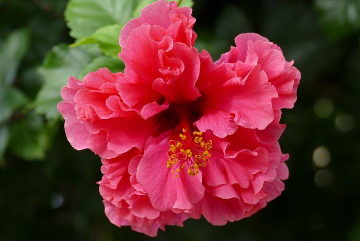 Ada yang Harum dan Ada yang Busuk, Mengapa Bunga-bunga Berbau?