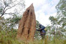 Ada Kangguru Mini hingga Rumah Semut, Ini Ragam Hayati di Taman Nasional Wasur Merauke Papua