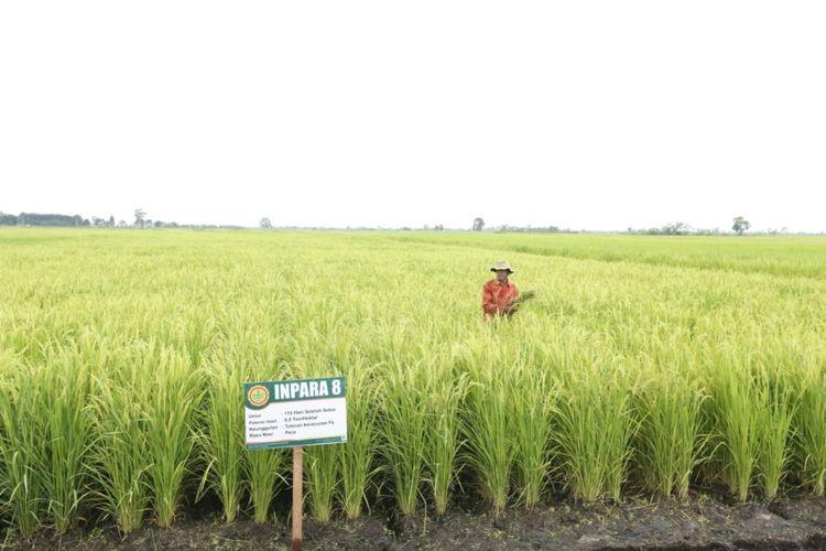 Pengendalian Alih Fungsi Lahan Jadi Strategi Peningkatan Produksi Padi
