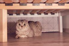 Mengapa Kucing Suka Bersembunyi?