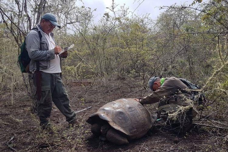 Para peneliti menemukan 30 kura-kura raksasa dari spesies yang disangka punah.