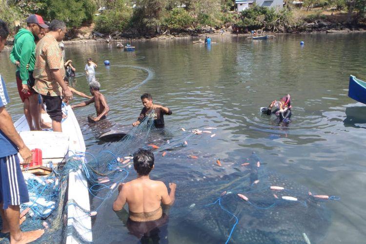 Hiu Paus saat terjaring pukat nelayan di Desa Nobo, Kecamatan Ilebura, Kabupaten Flores Timur, Nusa Tenggara Timur (NTT)