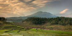 Kementan Dorong Petani Subang Ikut Asuransi untuk Jaga Lahan Pertanian
