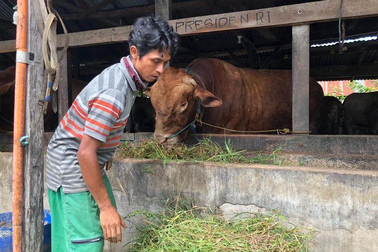 Sapi jenis Limosin dengan bobot lebih dari satu ton di  di peternakan Dwi Karya Palembang, Senin (13/7/2020). Sapi ini rencananya akan dibeli Presiden Joko Widodo untuk dikurban kan.
