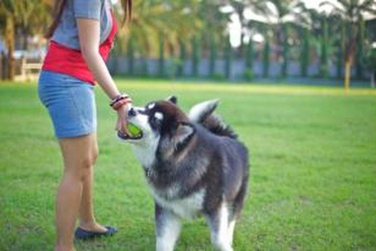 Menjadi penjaga binatang peliharaan seperti anjing bisa membuahkan penghasilan di Australia.