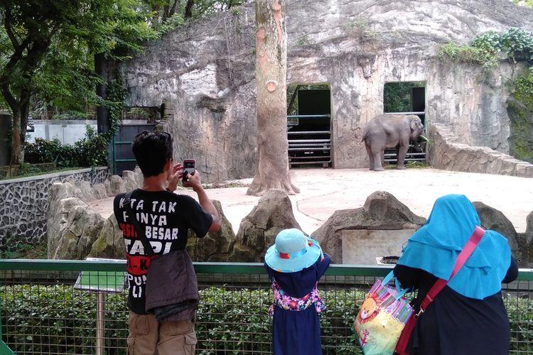 beberapa pengunjung terlihat memandang gajah di Taman Margasatwa Ragunan, Jakarta Selatan, Selasa (31/12/2019)