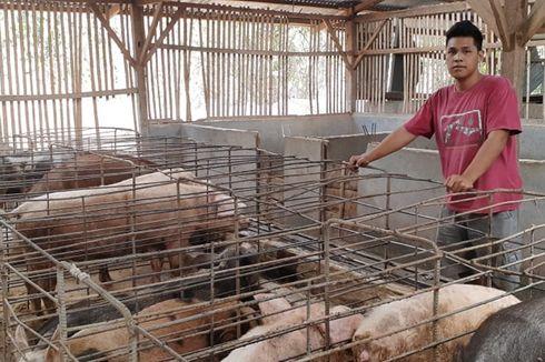Cerita Renold Berhenti Kuliah Saat Skripsi: Jadi Peternak Babi dengan Omzet Miliaran Rupiah