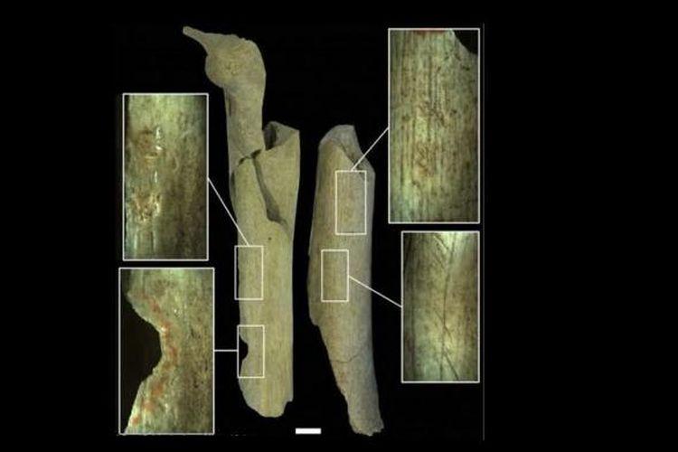Tulang-tulang manusia di goa Goyet memberi petunjuk praktek kanibalisme pada Neanderthal. Manusia purba itu juga memanfaatkan tulang sisa kanibalisme untuk membuat alat batu.