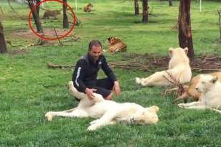 Dalam foto ini terlihat Dharma mengendap-endap di kejauhan, sementara Eduardo sedang asyik bercengkerama dengan para singa.