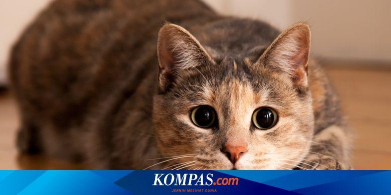 6 Masalah Kesehatan Yang Kerap Dialami Kucing