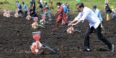 Jokowi Minta Mentan dan Gubernur Papua Barat Tingkatkan Kapasitas Produksi Pertanian
