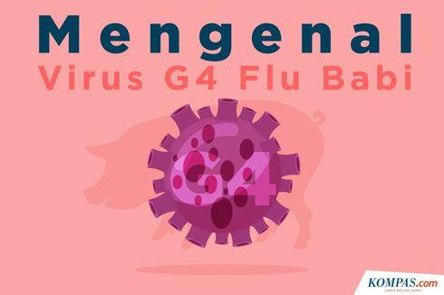 INFOGRAFIK: Mengenal Virus G4, Flu Babi Jenis Baru yang Berpotensi Jadi Pandemi