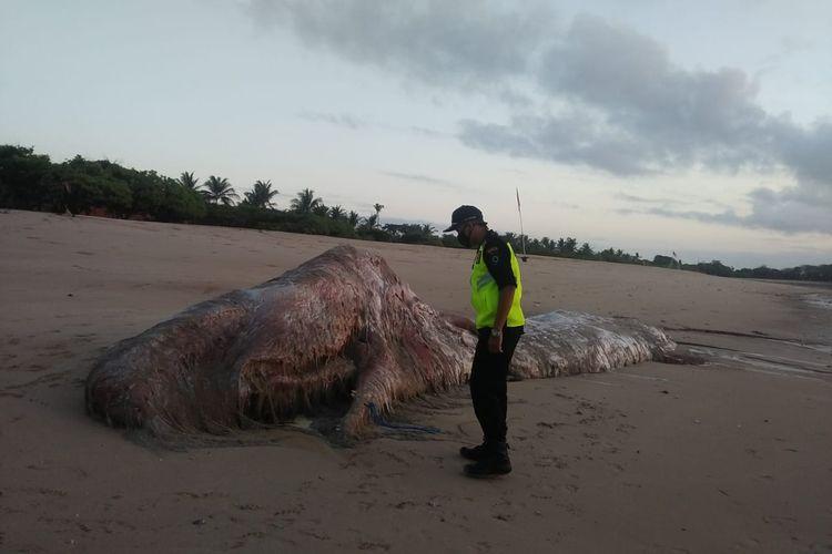Bangkai paus ditemukan terdampar di Pantai Mengiat, Nusa Dua, Badung, Bali, pada Rabu (18/11/2020) pagi