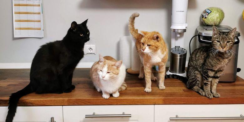 Kucing Tiba-tiba Nakal? Ini Penjelasan Dokter Hewan