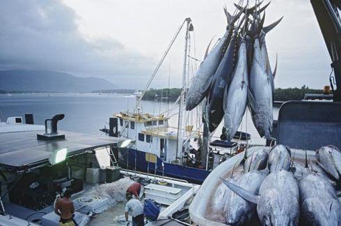 Tarif Kargo Mahal, Eksportir Ikan Ini Kirim Surat ke Susi