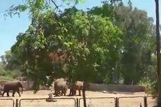 Kawanan Gajah di Kebun Binatang Israel Ini Lindungi Bayi Mereka dari Roket Hamas