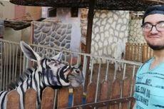Keledai di Kebun Binatang Mesir Dicat supaya Mirip Zebra
