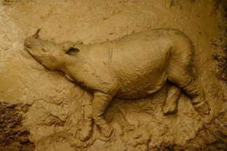 Badak sumatera remaja di Kalimantan yang ditemukan lewat kamera jebak pada 12 Maret 2016.  Badak itu mati pada Selasa 95/4/2016) karena infeksi.