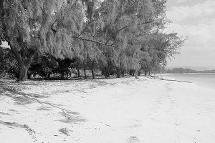 Pantai Puru Kambera yang menawan dengan pohon cemara tumbuh secara alamiah, tetapi rapi dan teratur. Rindang pohon-pohon ini membuat nyaman untuk berteduh dan istirahat.