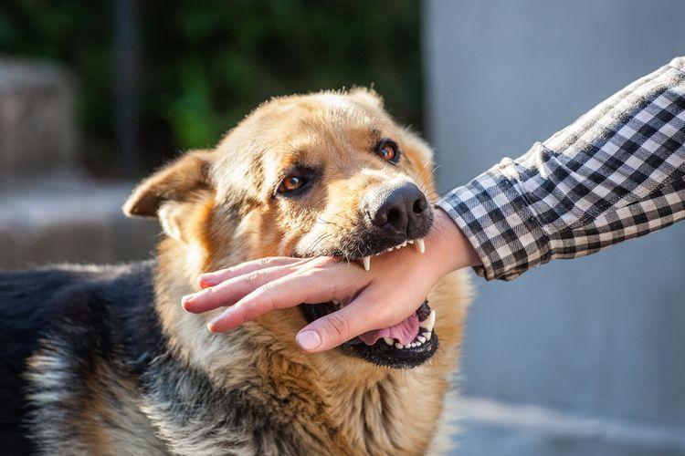 Ilustrasi gigitan anjing